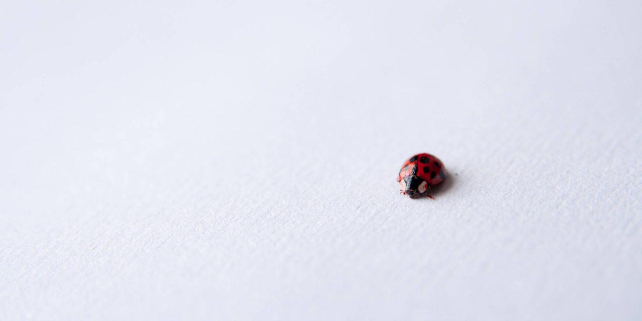 Microlearning / Mikroučenje